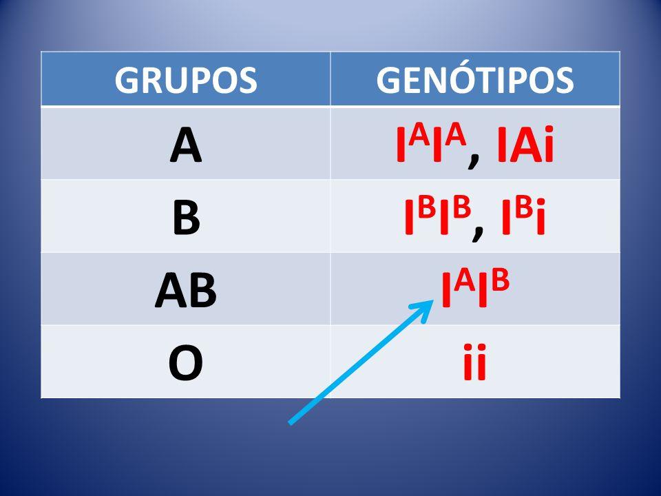GRUPOSGENÓTIPOS AI A I A, IAi BI B I B, I B i ABIAIBIAIB Oii