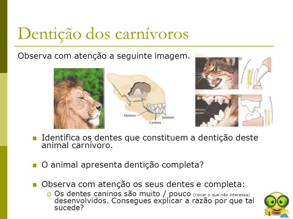 Dentição dos carnívoros Observa com atenção a seguinte imagem. Identifica os dentes que constituem a dentição deste animal carnívoro. O animal apresen