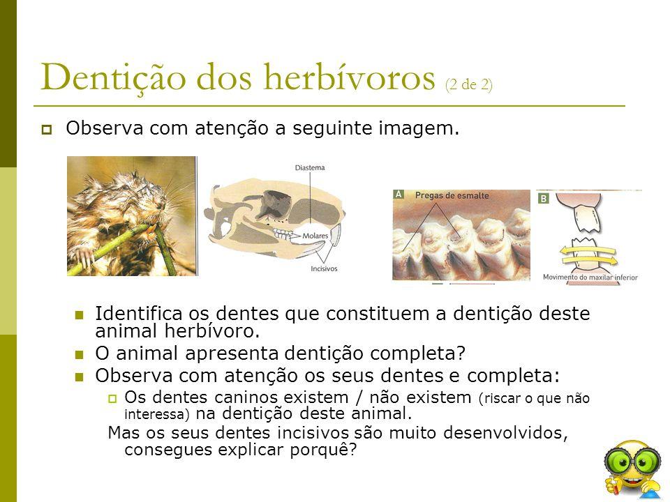 Dentição dos herbívoros (2 de 2)  Observa com atenção a seguinte imagem. Identifica os dentes que constituem a dentição deste animal herbívoro. O ani
