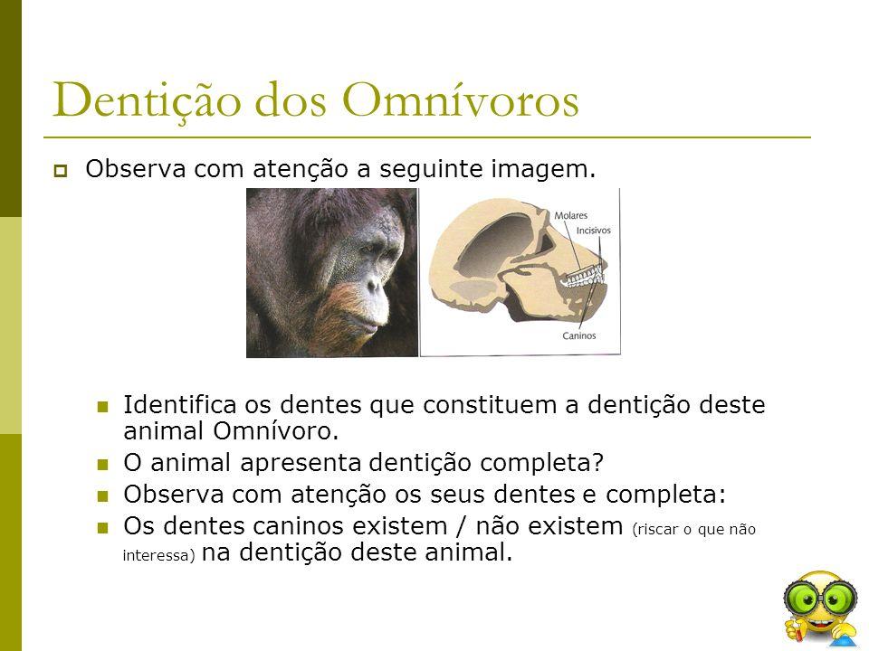 Dentição dos Omnívoros  Observa com atenção a seguinte imagem. Identifica os dentes que constituem a dentição deste animal Omnívoro. O animal apresen