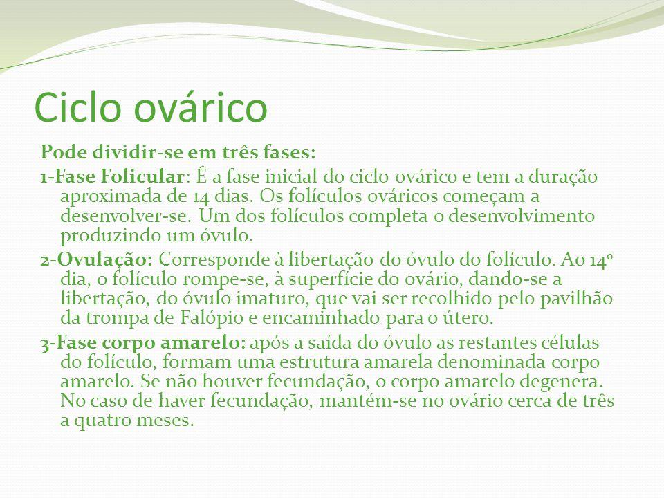 Ciclo ovárico Pode dividir-se em três fases: 1-Fase Folicular: É a fase inicial do ciclo ovárico e tem a duração aproximada de 14 dias.