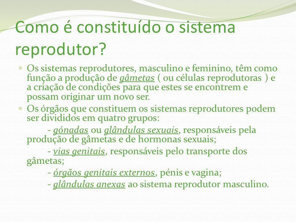 Como é constituído o sistema reprodutor.
