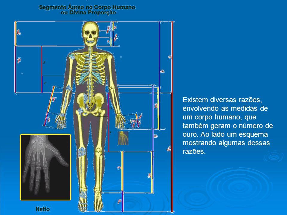 Existem diversas razões, envolvendo as medidas de um corpo humano, que também geram o número de ouro. Ao lado um esquema mostrando algumas dessas razõ