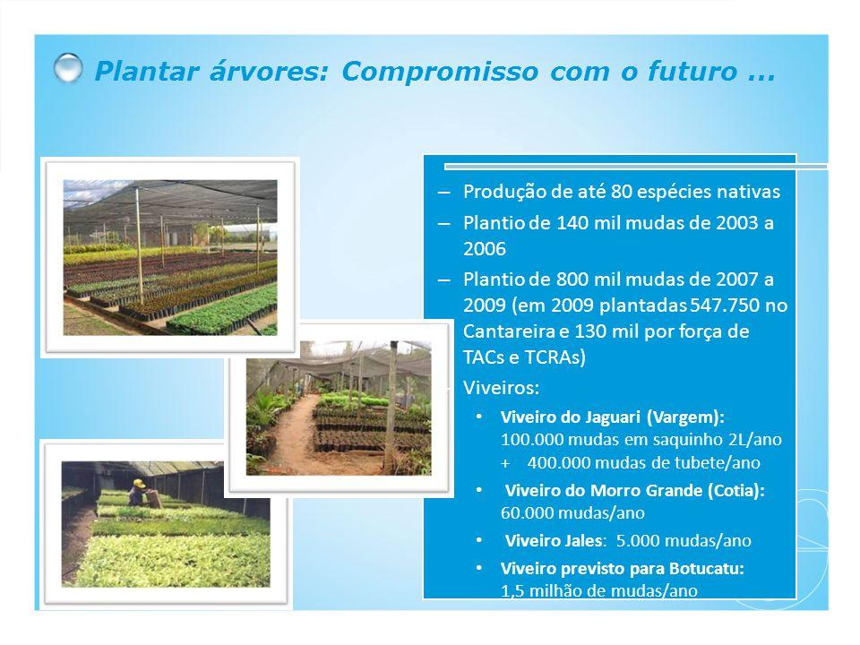 Plantar árvores: Compromisso com o futuro...