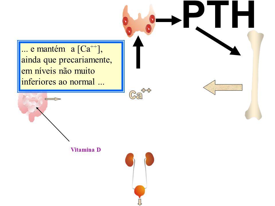 Vitamina D... e mantém a [Ca ++ ], ainda que precariamente, em níveis não muito inferiores ao normal... PTH