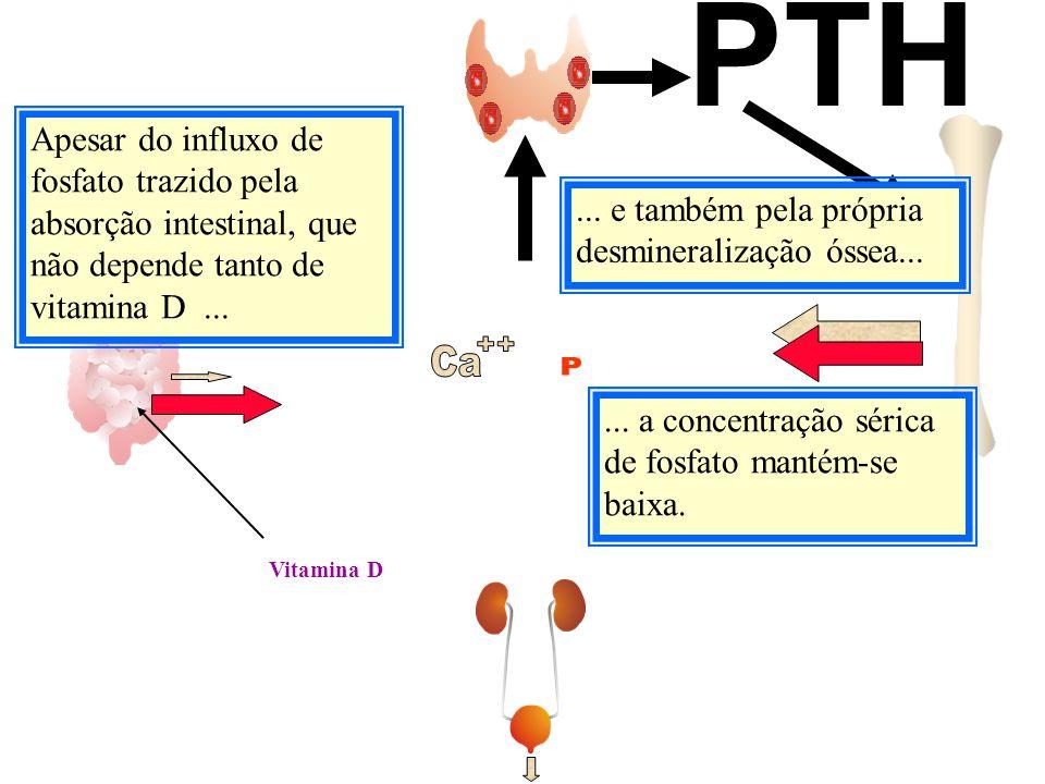 Vitamina D PTH Apesar do influxo de fosfato trazido pela absorção intestinal, que não depende tanto de vitamina D...... a concentração sérica de fosfa