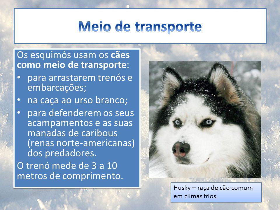 Os esquimós usam os cães como meio de transporte: para arrastarem trenós e embarcações; na caça ao urso branco; para defenderem os seus acampamentos e
