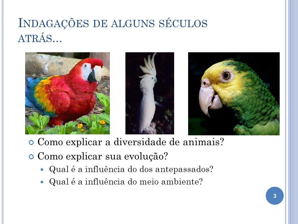 I NDAGAÇÕES DE ALGUNS SÉCULOS ATRÁS...Como explicar a diversidade de animais.