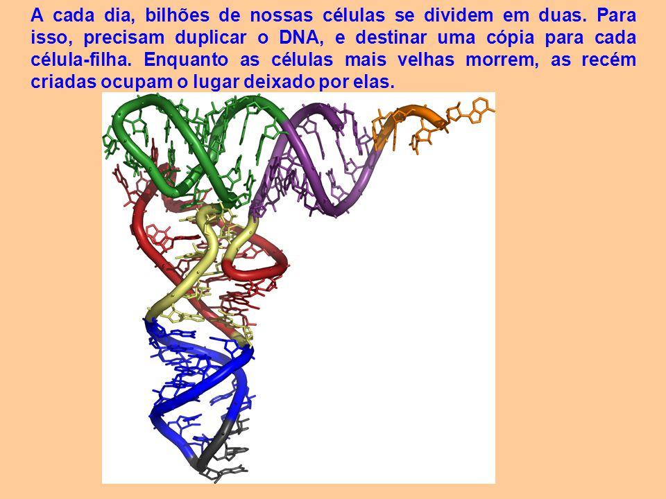 O problema é que o mecanismo de divisão celular é sujeito a pequenos erros.
