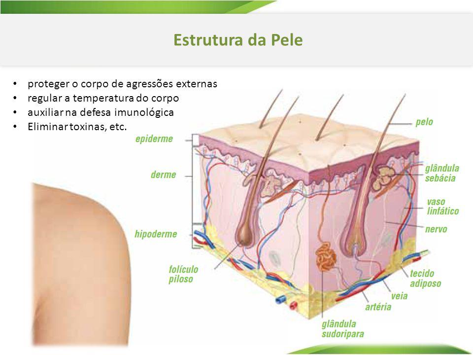 Estrutura da Pele proteger o corpo de agressões externas regular a temperatura do corpo auxiliar na defesa imunológica Eliminar toxinas, etc.