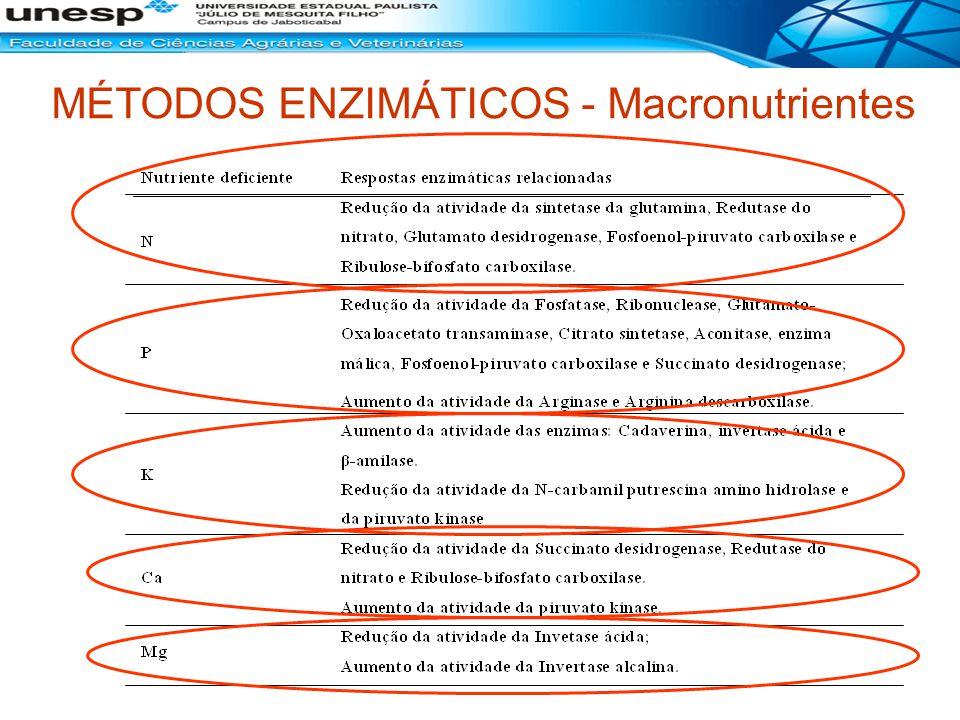 MÉTODOS ENZIMÁTICOS - Macronutrientes