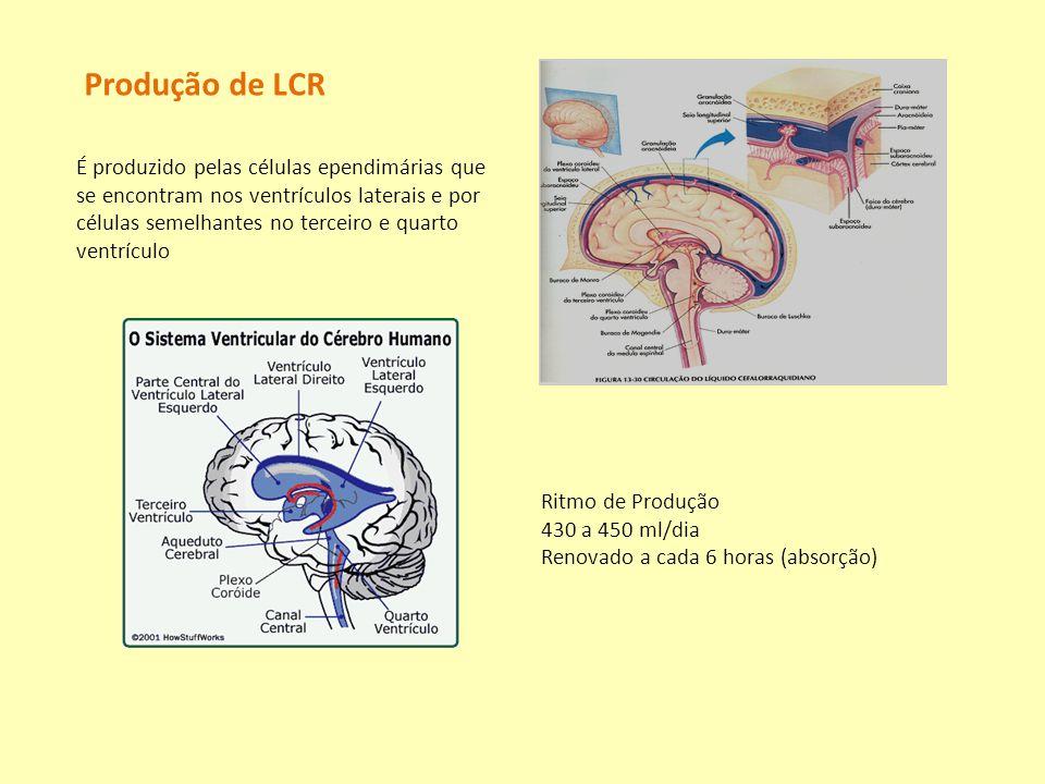 Produção de LCR É produzido pelas células ependimárias que se encontram nos ventrículos laterais e por células semelhantes no terceiro e quarto ventrí