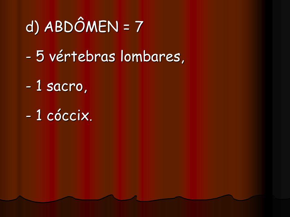 d) ABDÔMEN = 7 - 5 vértebras lombares, - 1 sacro, - 1 cóccix.