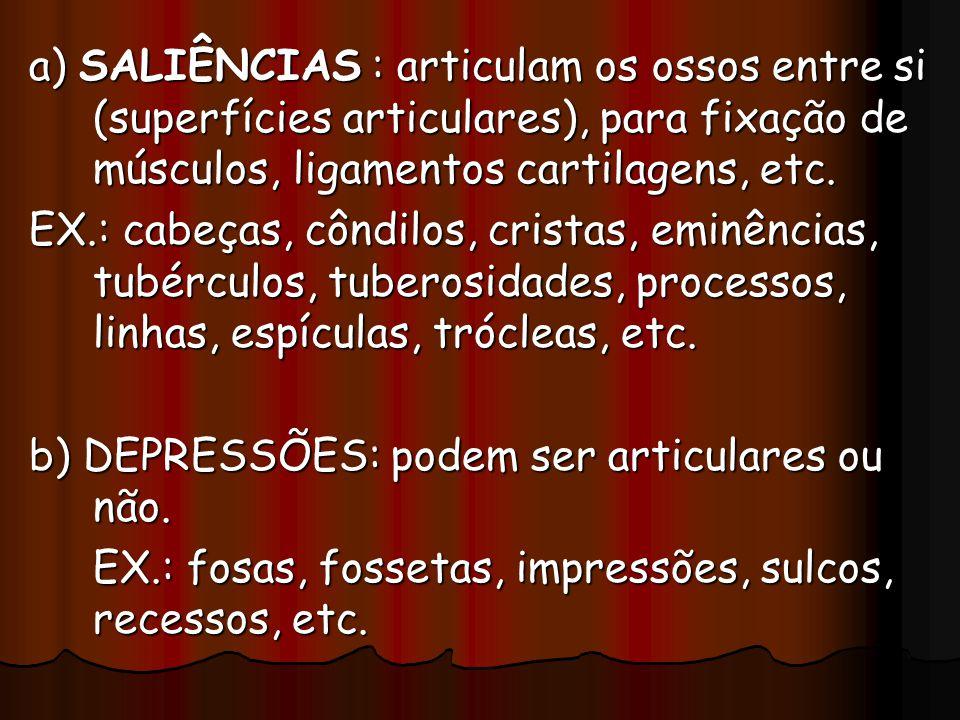 a) SALIÊNCIAS : articulam os ossos entre si (superfícies articulares), para fixação de músculos, ligamentos cartilagens, etc. EX.: cabeças, côndilos,