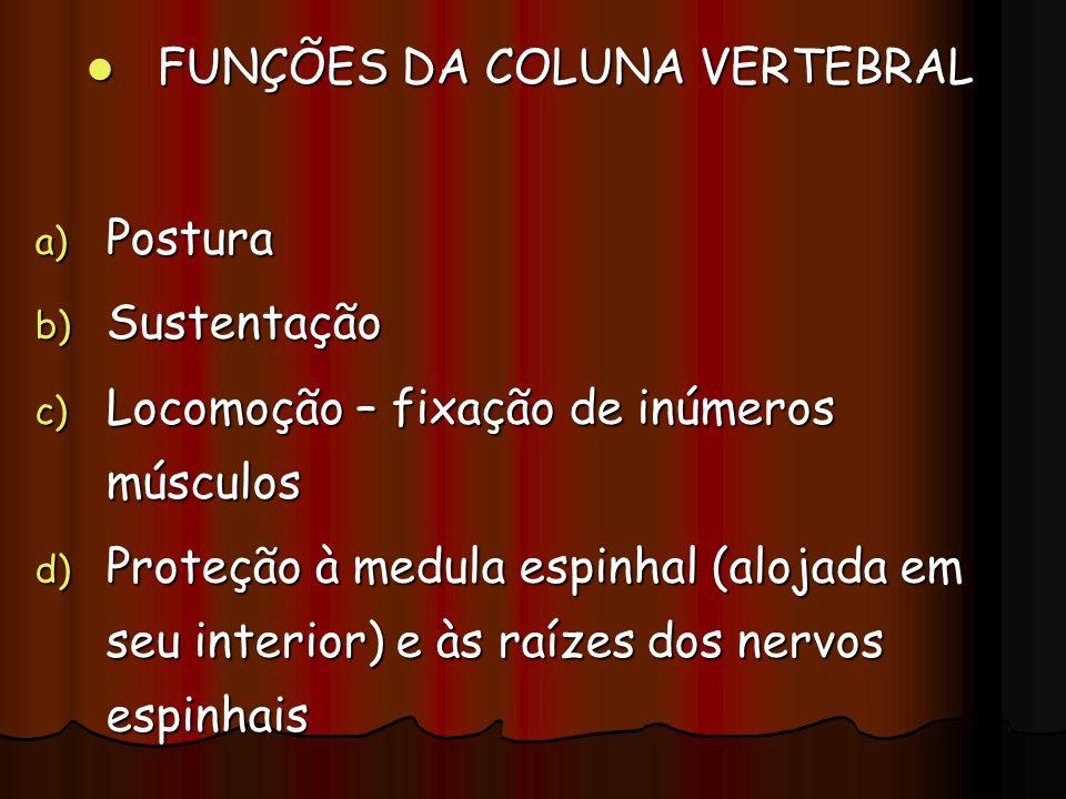 FUNÇÕES DA COLUNA VERTEBRAL FUNÇÕES DA COLUNA VERTEBRAL a) Postura b) Sustentação c) Locomoção – fixação de inúmeros músculos d) Proteção à medula esp