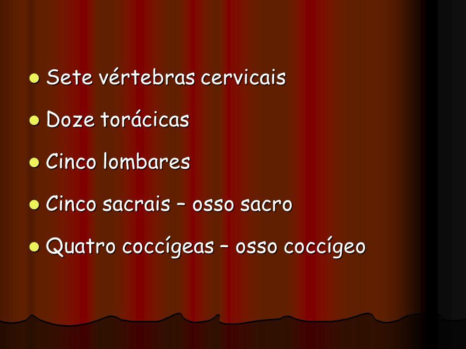 Sete vértebras cervicais Sete vértebras cervicais Doze torácicas Doze torácicas Cinco lombares Cinco lombares Cinco sacrais – osso sacro Cinco sacrais
