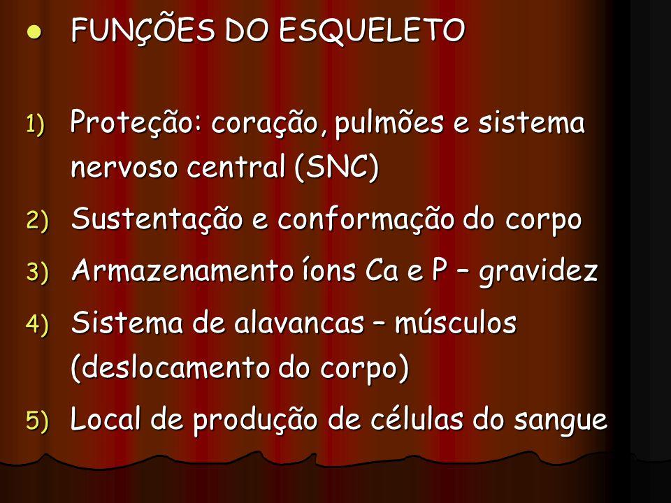 FUNÇÕES DO ESQUELETO FUNÇÕES DO ESQUELETO 1) Proteção: coração, pulmões e sistema nervoso central (SNC) 2) Sustentação e conformação do corpo 3) Armaz