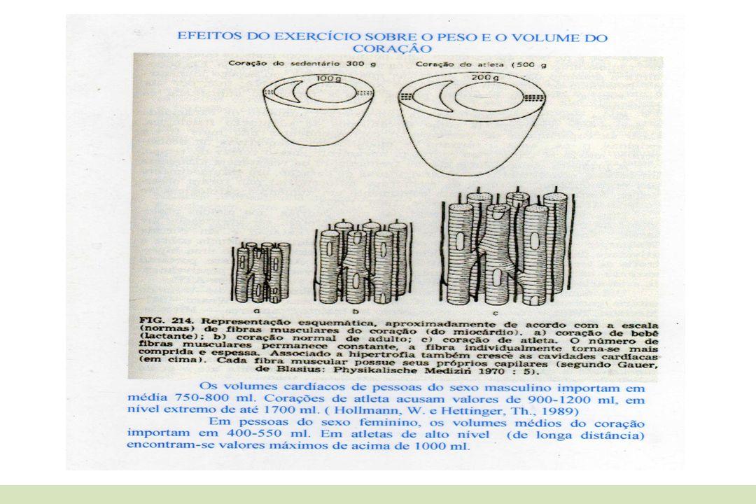 b) Cardiopulmonares: Aumento do volume vital; Aumento da eficiência respiratória; Maior capacidade de oxigenação (> VO 2 máx.); c) Metabólicos: Estimul.