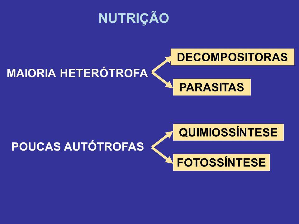 DECOMPOSITORAS NUTRIÇÃO MAIORIA HETERÓTROFA PARASITAS POUCAS AUTÓTROFAS QUIMIOSSÍNTESE FOTOSSÍNTESE