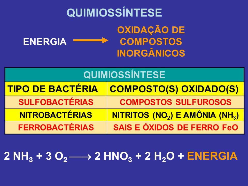 QUIMIOSSÍNTESE OXIDAÇÃO DE COMPOSTOS INORGÂNICOS ENERGIA QUIMIOSSÍNTESE TIPO DE BACTÉRIACOMPOSTO(S) OXIDADO(S) SULFOBACTÉRIASCOMPOSTOS SULFUROSOS NITR
