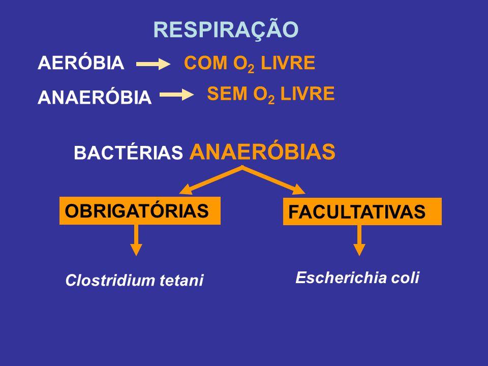 RESPIRAÇÃO AERÓBIA ANAERÓBIA OBRIGATÓRIAS BACTÉRIAS ANAERÓBIAS COM O 2 LIVRE SEM O 2 LIVRE FACULTATIVAS Clostridium tetani Escherichia coli