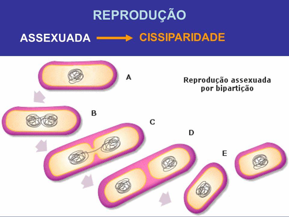 REPRODUÇÃO CISSIPARIDADE ASSEXUADA