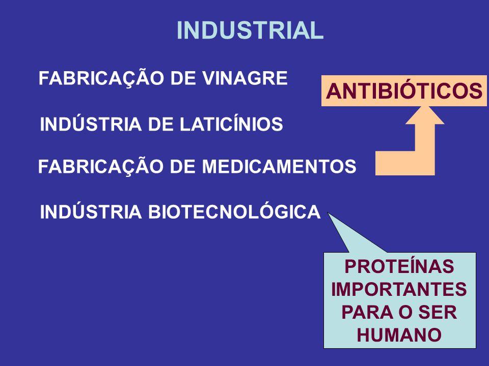 INDUSTRIAL FABRICAÇÃO DE VINAGRE INDÚSTRIA DE LATICÍNIOS FABRICAÇÃO DE MEDICAMENTOS ANTIBIÓTICOS INDÚSTRIA BIOTECNOLÓGICA PROTEÍNAS IMPORTANTES PARA O