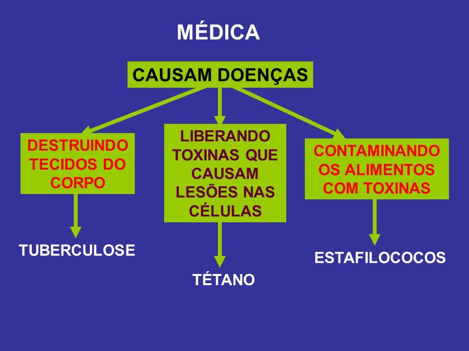 MÉDICA CAUSAM DOENÇAS DESTRUINDO TECIDOS DO CORPO LIBERANDO TOXINAS QUE CAUSAM LESÕES NAS CÉLULAS CONTAMINANDO OS ALIMENTOS COM TOXINAS TUBERCULOSE TÉ