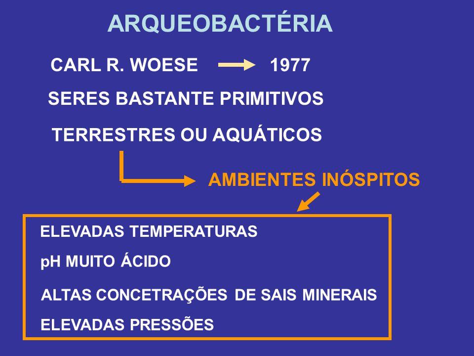 ARQUEOBACTÉRIA CARL R. WOESE1977 SERES BASTANTE PRIMITIVOS AMBIENTES INÓSPITOS TERRESTRES OU AQUÁTICOS ELEVADAS TEMPERATURAS pH MUITO ÁCIDO ALTAS CONC