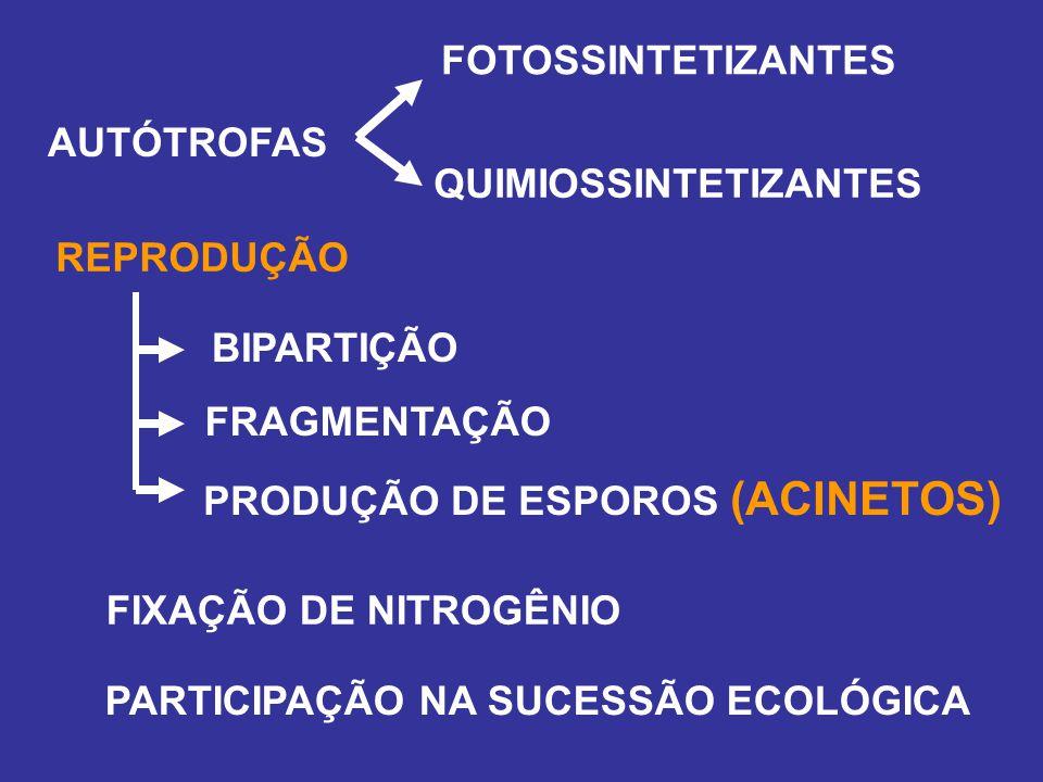 QUIMIOSSINTETIZANTES AUTÓTROFAS FOTOSSINTETIZANTES REPRODUÇÃO BIPARTIÇÃO FRAGMENTAÇÃO PRODUÇÃO DE ESPOROS (ACINETOS) PARTICIPAÇÃO NA SUCESSÃO ECOLÓGIC