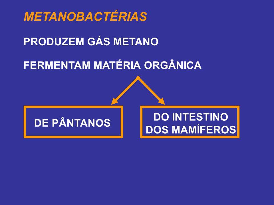 METANOBACTÉRIAS PRODUZEM GÁS METANO FERMENTAM MATÉRIA ORGÂNICA DE PÂNTANOS DO INTESTINO DOS MAMÍFEROS
