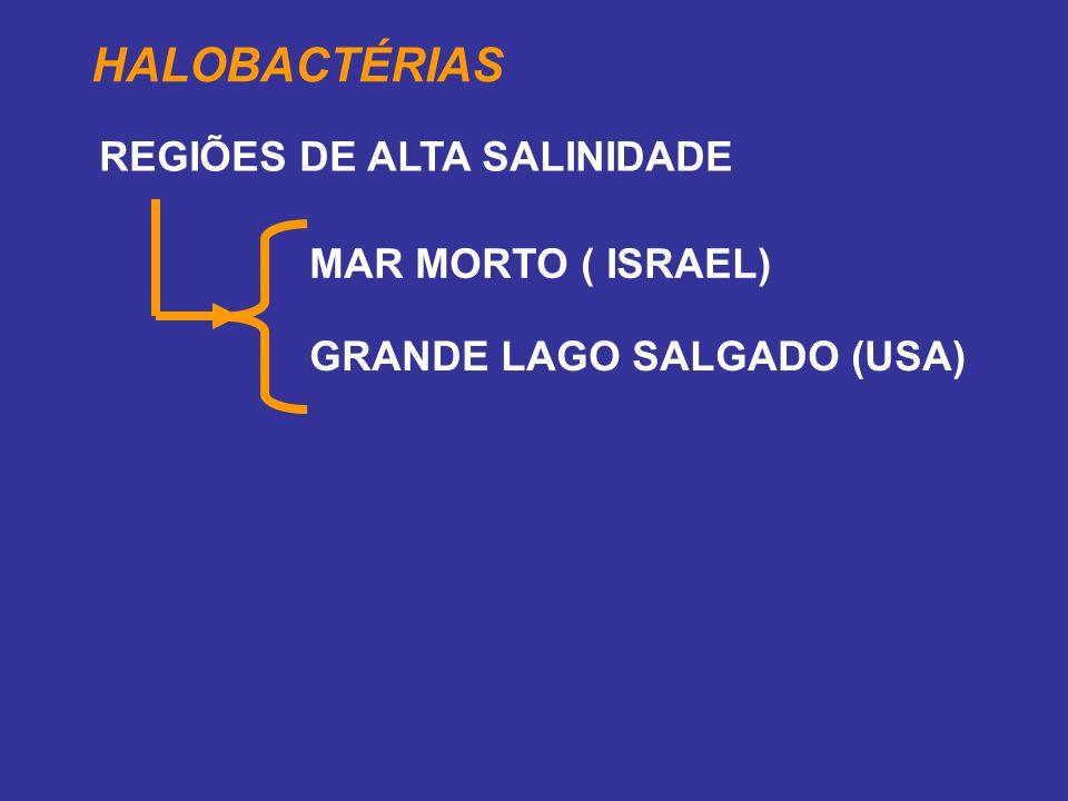 HALOBACTÉRIAS GRANDE LAGO SALGADO (USA) REGIÕES DE ALTA SALINIDADE MAR MORTO ( ISRAEL)