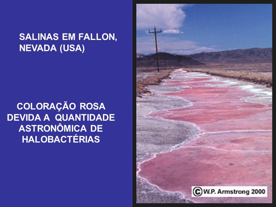 SALINAS EM FALLON, NEVADA (USA) COLORAÇÃO ROSA DEVIDA A QUANTIDADE ASTRONÔMICA DE HALOBACTÉRIAS