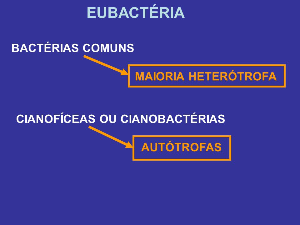 EUBACTÉRIA BACTÉRIAS COMUNS CIANOFÍCEAS OU CIANOBACTÉRIAS MAIORIA HETERÓTROFA AUTÓTROFAS
