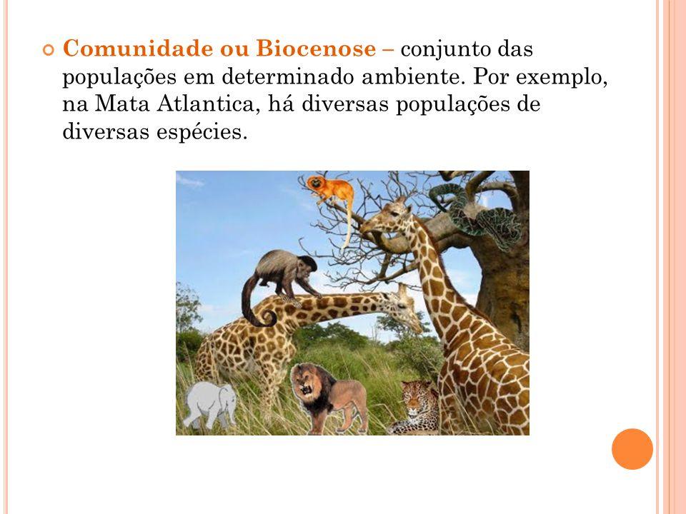 Comunidade ou Biocenose – conjunto das populações em determinado ambiente. Por exemplo, na Mata Atlantica, há diversas populações de diversas espécies