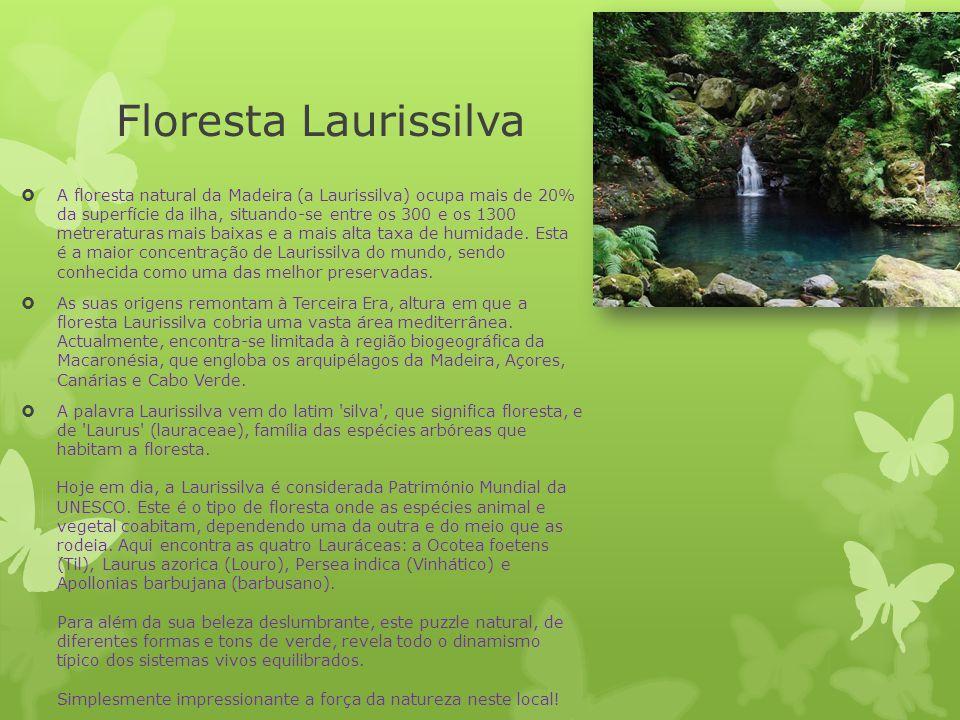 Floresta Laurissilva  A floresta natural da Madeira (a Laurissilva) ocupa mais de 20% da superfície da ilha, situando-se entre os 300 e os 1300 metre