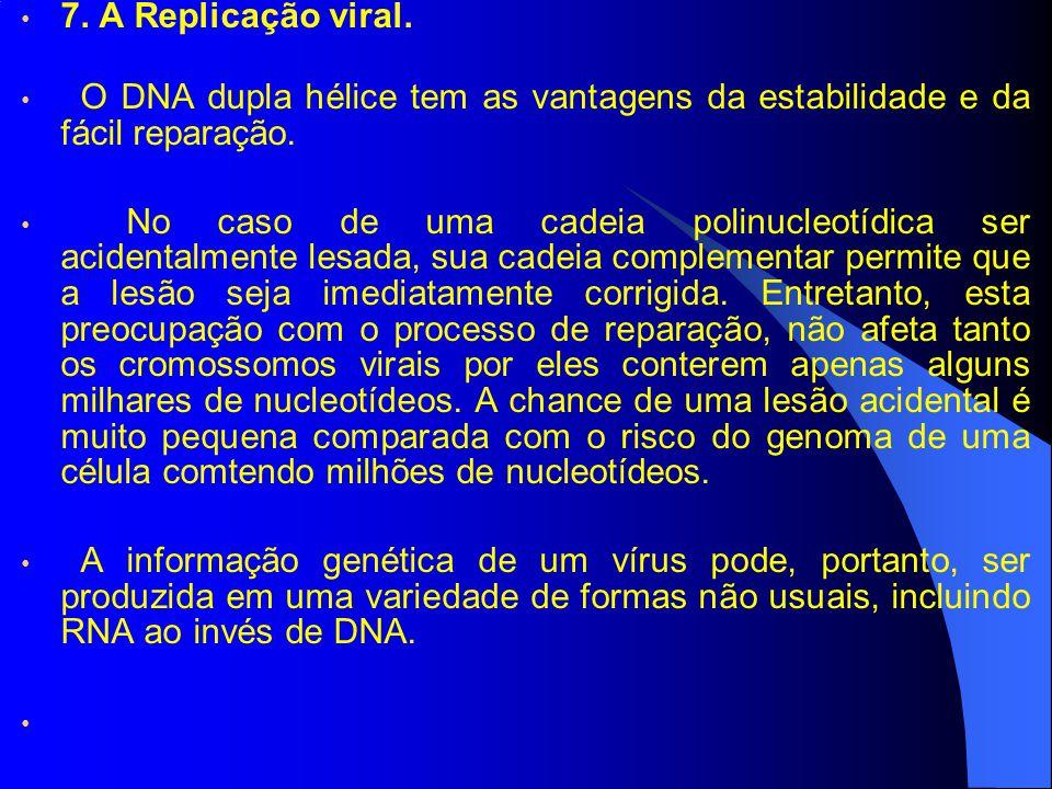 7.A Replicação viral.