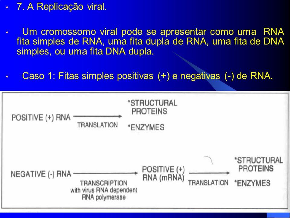 7. A Replicação viral. Um cromossomo viral pode se apresentar como uma RNA fita simples de RNA, uma fita dupla de RNA, uma fita de DNA simples, ou uma