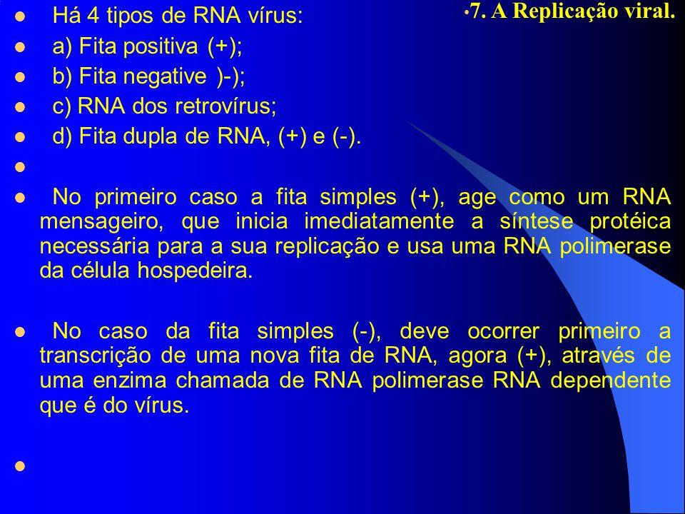 Há 4 tipos de RNA vírus: a) Fita positiva (+); b) Fita negative )-); c) RNA dos retrovírus; d) Fita dupla de RNA, (+) e (-). No primeiro caso a fita s