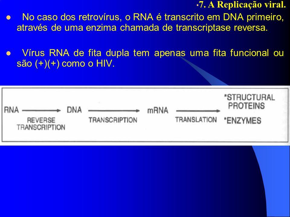 No caso dos retrovírus, o RNA é transcrito em DNA primeiro, através de uma enzima chamada de transcriptase reversa. Vírus RNA de fita dupla tem apenas