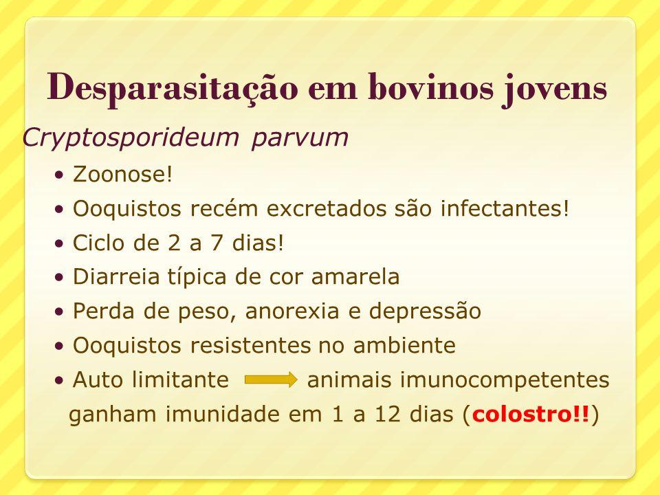 Desparasitação em bovinos jovens Cryptosporideum parvum Zoonose! Ooquistos recém excretados são infectantes! Ciclo de 2 a 7 dias! Diarreia típica de c