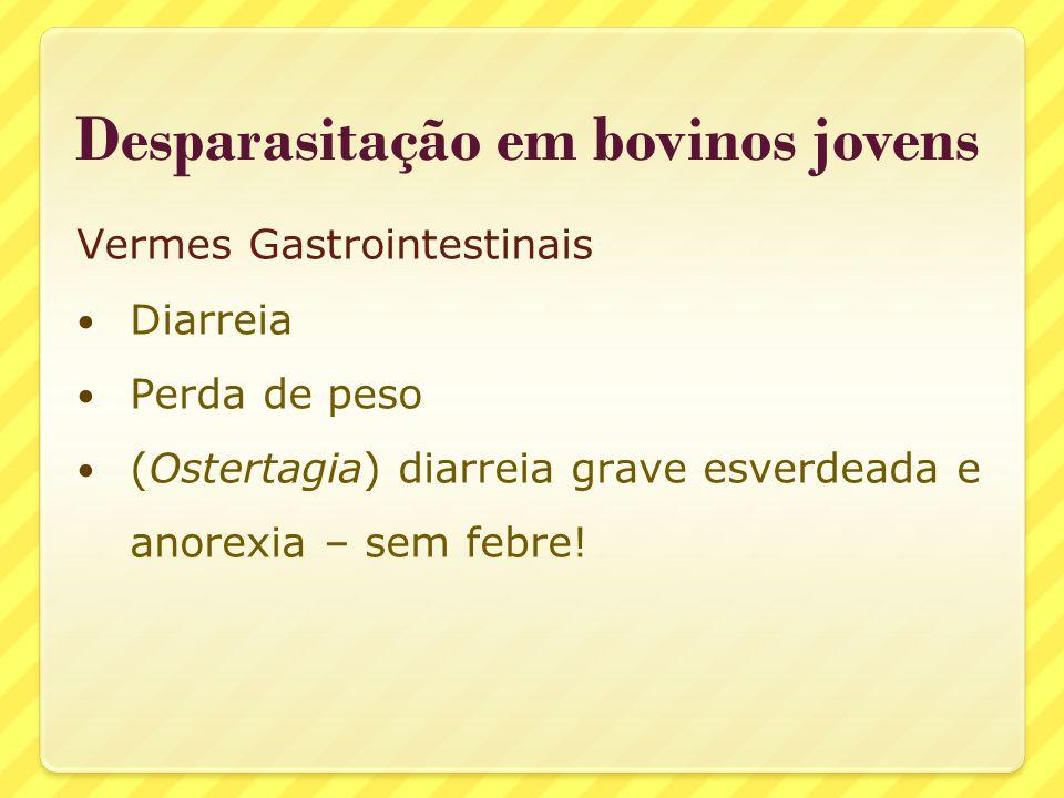 Desparasitação em bovinos jovens Vermes Gastrointestinais Diarreia Perda de peso (Ostertagia) diarreia grave esverdeada e anorexia – sem febre!