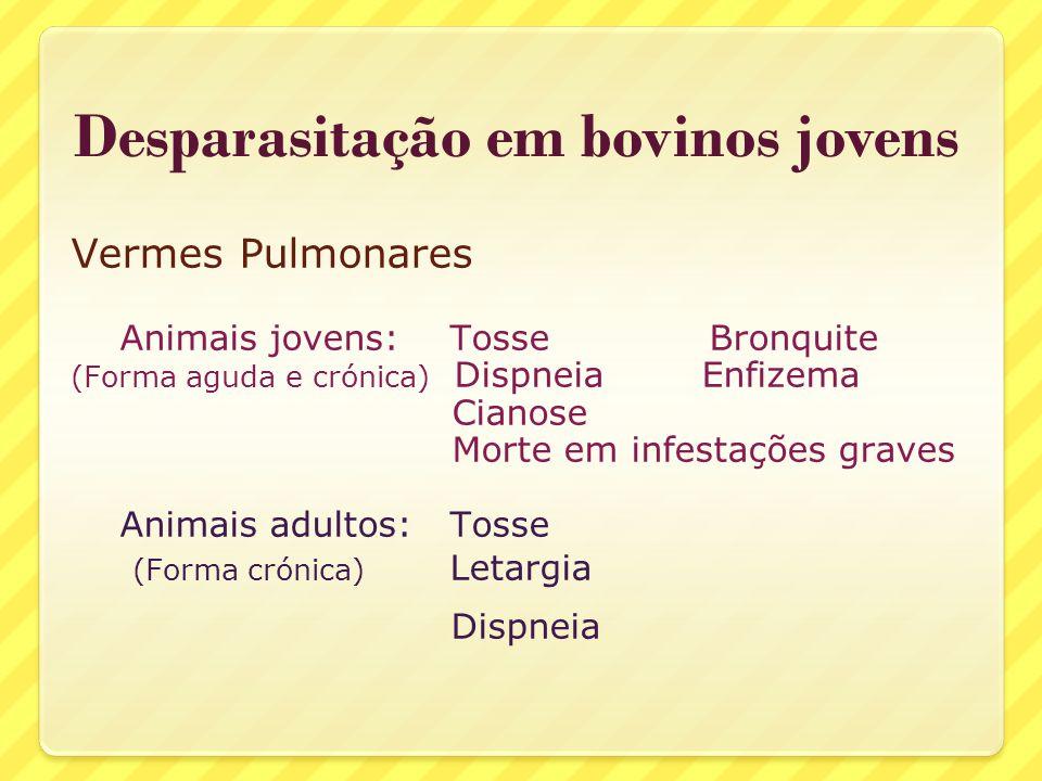 Vermes Pulmonares Animais jovens: Tosse Bronquite (Forma aguda e crónica) Dispneia Enfizema Cianose Morte em infestações graves Animais adultos: Tosse
