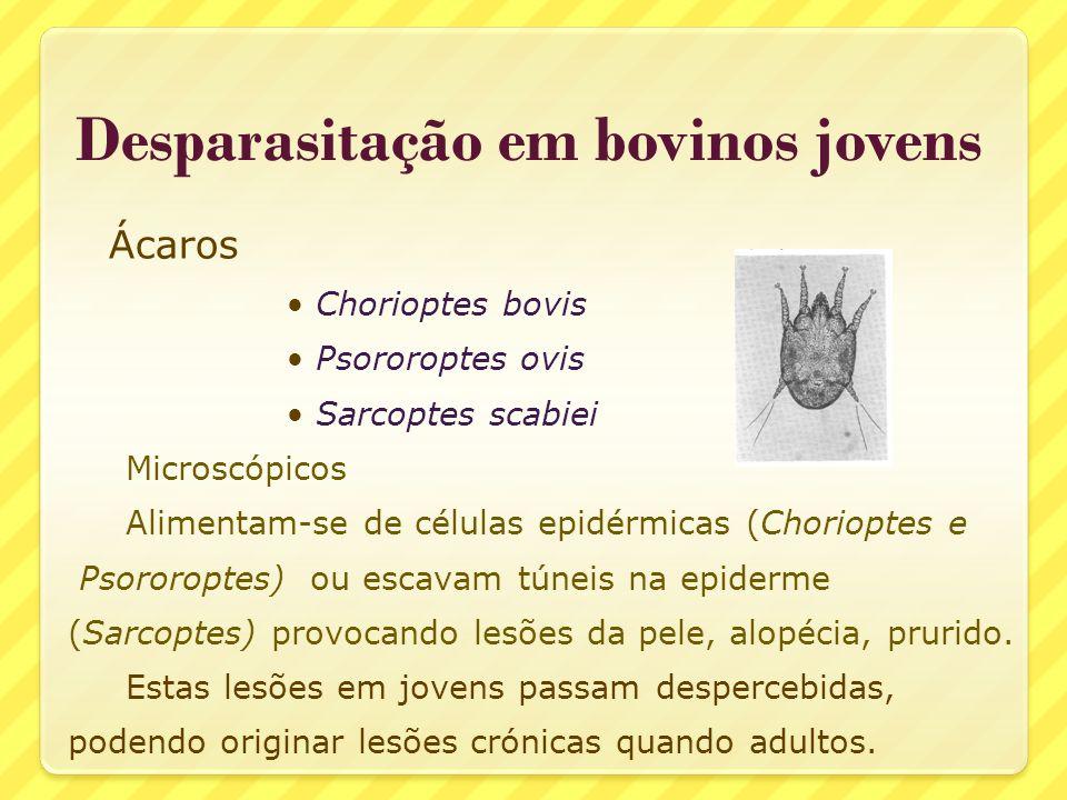 Desparasitação em bovinos jovens Ácaros Chorioptes bovis Psororoptes ovis Sarcoptes scabiei Microscópicos Alimentam-se de células epidérmicas (Choriop