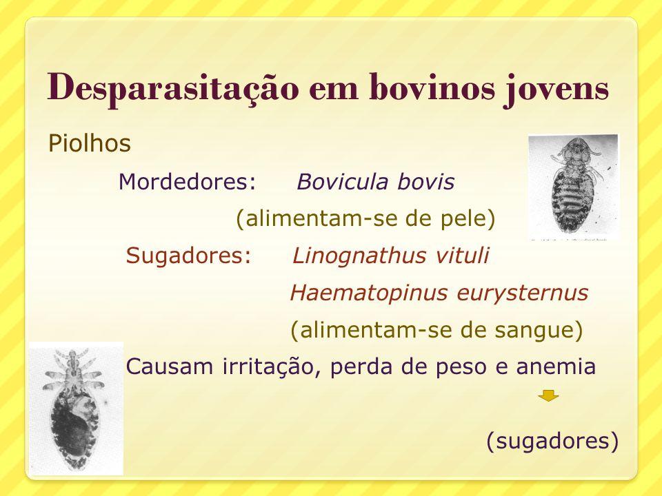 Desparasitação em bovinos jovens Piolhos Mordedores: Bovicula bovis (alimentam-se de pele) Sugadores: Linognathus vituli Haematopinus eurysternus (ali