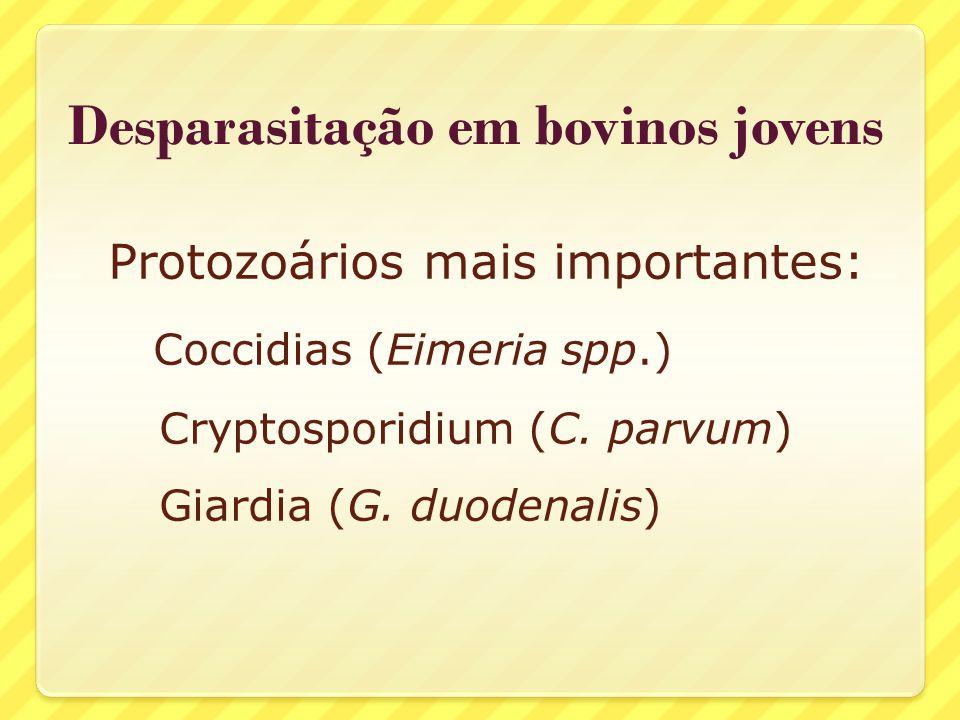 Desparasitação em bovinos jovens Protozoários mais importantes: Coccidias (Eimeria spp.) Cryptosporidium (C. parvum) Giardia (G. duodenalis)