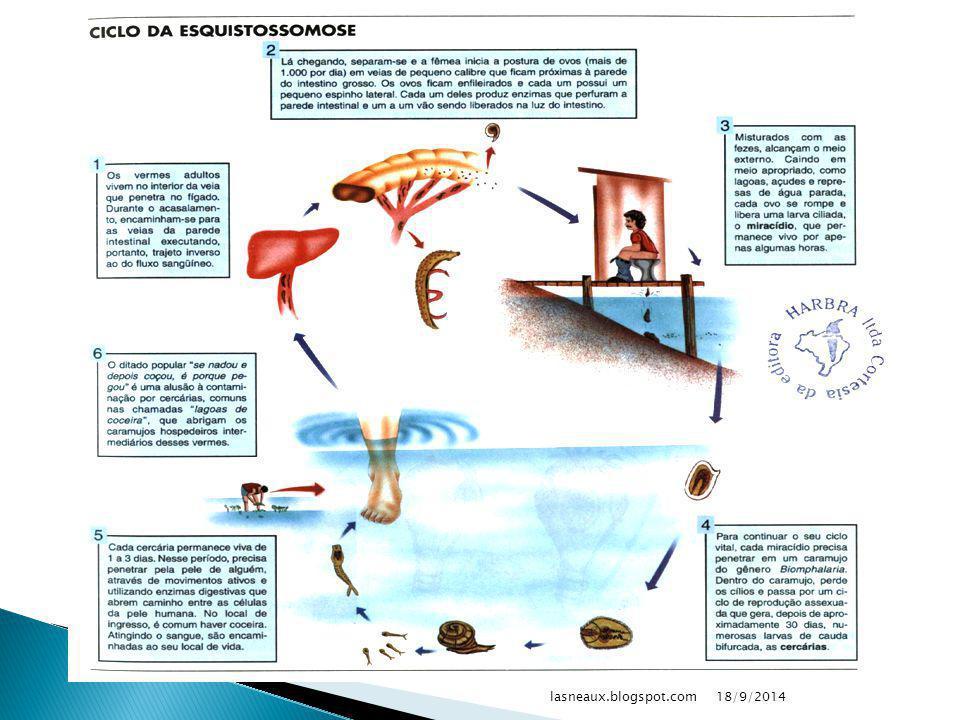  Causador: ◦ Schistosoma mansoni  Contaminação: ◦ Penetração de larvas pela pele  Sintoma: ◦ Coceira, diarréia e vômitos ◦ Hepatoesplenomegalia, cirrose e ascite  Profilaxia: ◦ Controlar caramujos e cercárias ◦ Saneamento básico 18/9/2014lasneaux.blogspot.com