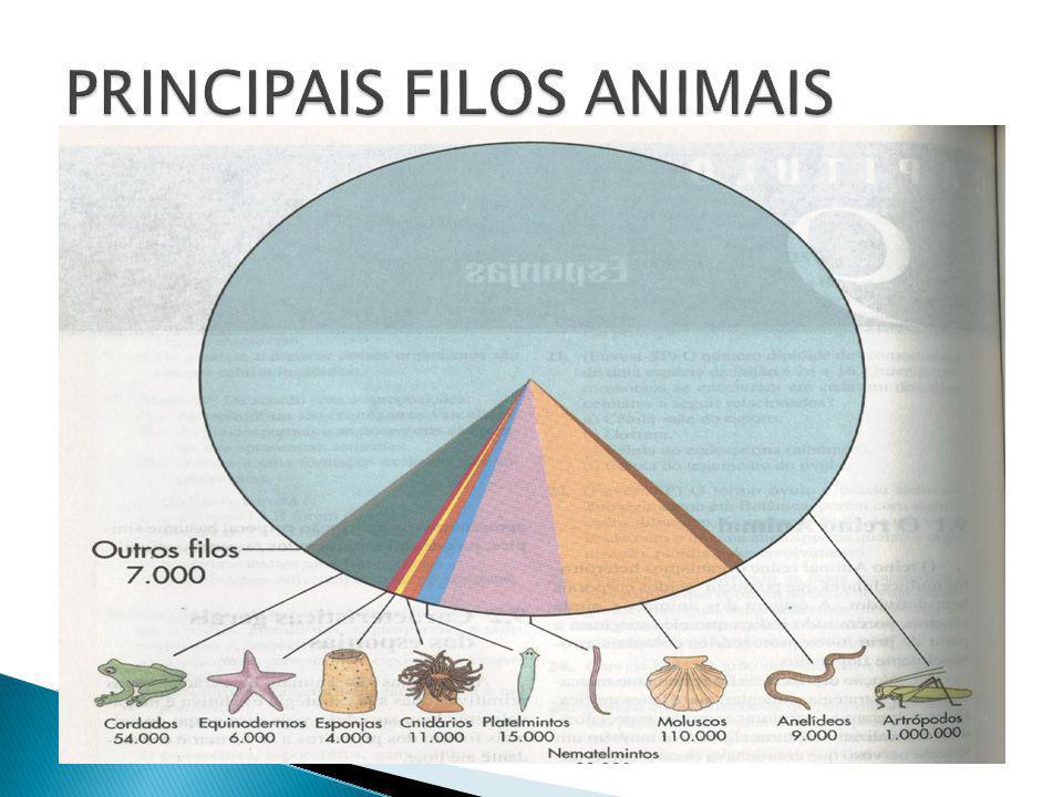 Capítulo 08 Prof. Lourenço www.detonei.com