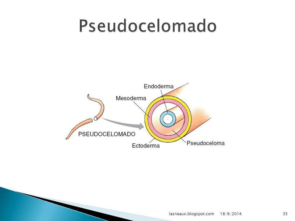  Triblásticos  Protostômios  Pseudocelomados 18/9/201434lasneaux.blogspot.com