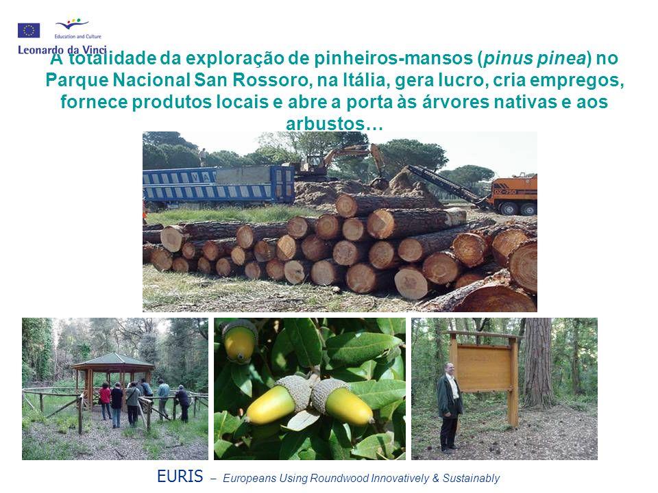 A totalidade da exploração de pinheiros-mansos (pinus pinea) no Parque Nacional San Rossoro, na Itália, gera lucro, cria empregos, fornece produtos lo